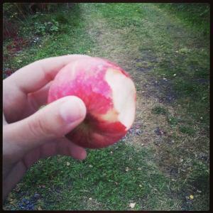 Epler fra eget tre