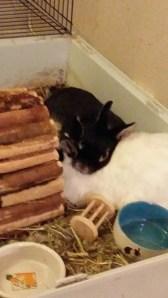 Kaninlykke <3